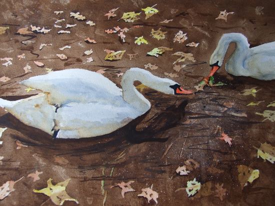 Autumn Swans - Animals, Birds and Plants Art Gallery - Painting by Woking Surrey Artist David Harmer