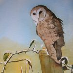 Barn Owl – Watercolour Painting – Art by Woking Surrey Artist David Harmer