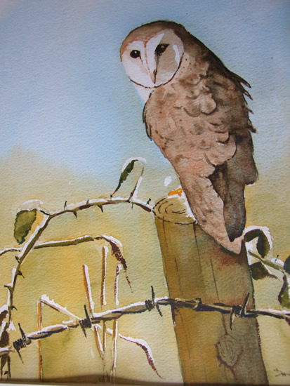 Barn Owl - Watercolour Art by Woking Surrey Artist David Harmer