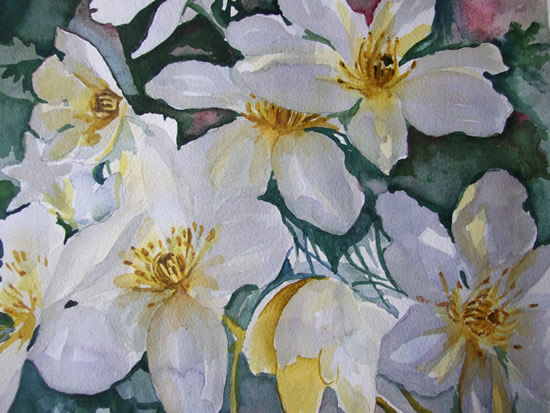 Clematis - Flowers Art Gallery - Painting by Woking Surrey Artist David Harmer