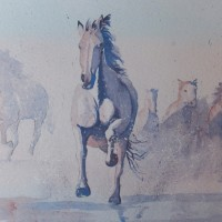 Galloping Horses – Animals, Birds and Plants Art Gallery – Painting by Woking Surrey Artist David Harmer