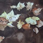 Leaves on Basingstoke Canal Woking – Watercolour Painting – Art by Woking Surrey Artist David Harmer