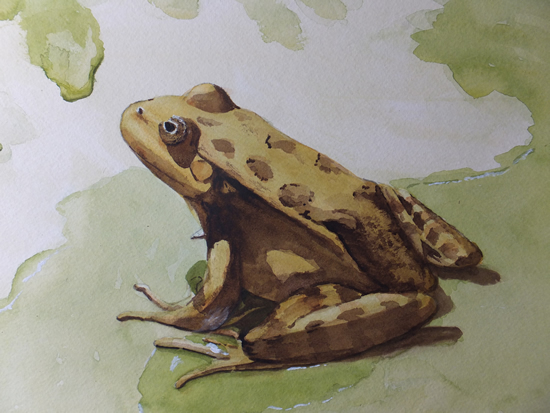 Little Green Frog - Animals, Birds and Plants Art Gallery - Painting by Woking Surrey Artist David Harmer