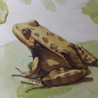 Little Green Frog – Animals, Birds and Plants Art Gallery – Painting by Woking Surrey Artist David Harmer
