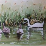 Swan Family on the Basingstoke Canal – Surrey Art Gallery – Painting by Woking Surrey Artist David Harmer