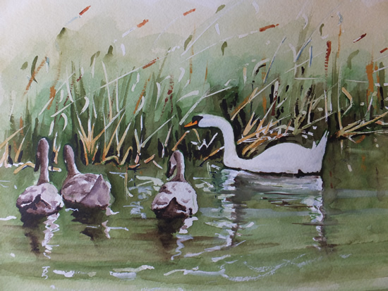 Swan Family on the Basingstoke Canal - Surrey Art Gallery - Painting by Woking Surrey Artist David Harmer
