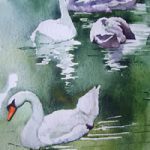 Swans on Basingstoke Canal – Watercolour Art by Woking Surrey Artist David Harmer