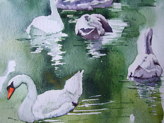 Swans on Basingstoke Canal - Watercolour Art by Woking Surrey Artist David Harmer