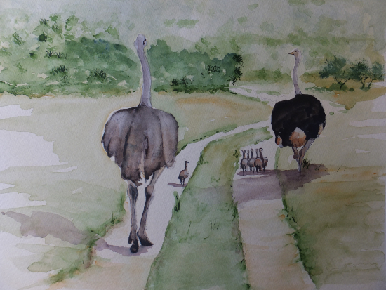 The Ostrich Family - Animals, Birds and Plants Art Gallery - Painting by Woking Surrey Artist David Harmer