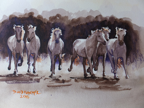 Wild Horses of the Camargue - Animals, Birds and Plants Art Gallery - Painting by Woking Surrey Artist David Harmer